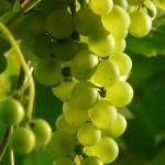 Sałatki i surówki z winogron